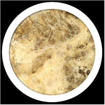 vegetal mycelium chitosan vegan