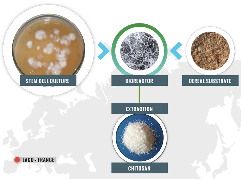 Mycelium vegan chitosan